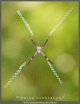 Do all spiders make webs?