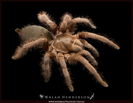 Why are spiders so hairy?