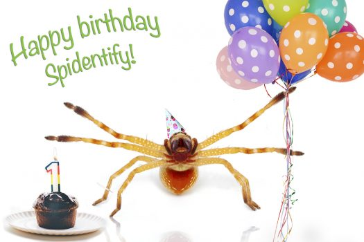 Happy first birthday Spidentify!
